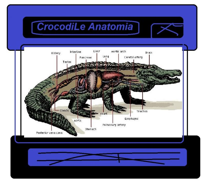 crocodiLe anatomy