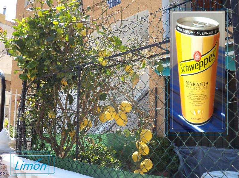lemon tree schweppes