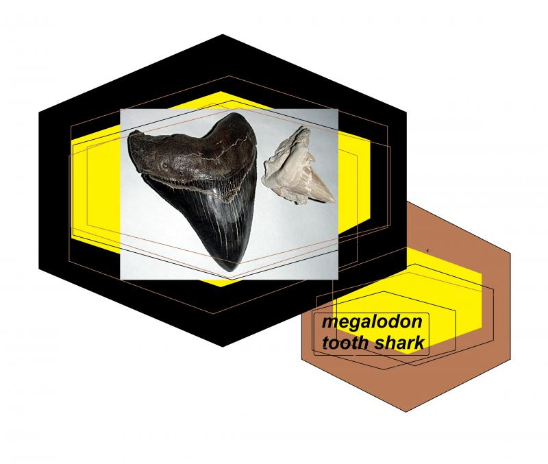 megalodon tooth shark 1