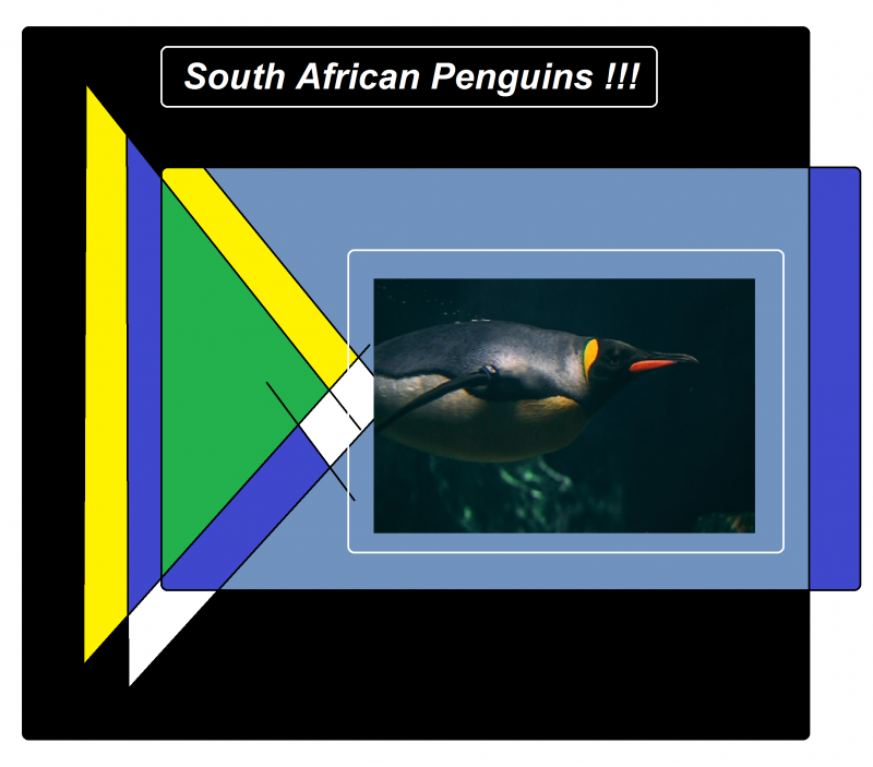 south african penguins 897651